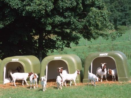 ARNDT Tierunterstand Modell 20 | Ziegen-Iglu
