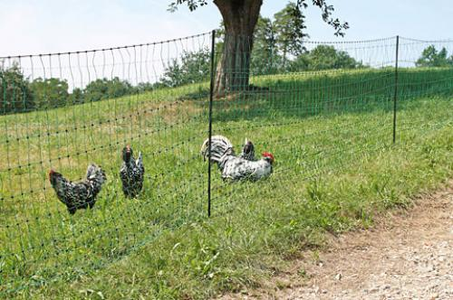Geflügelnetz PoultryNet grün elektrifizierbar