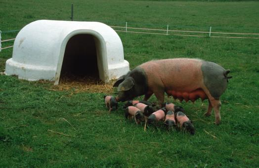 ARNDT Tierunterstand Modell 40 | Schweine-Iglu