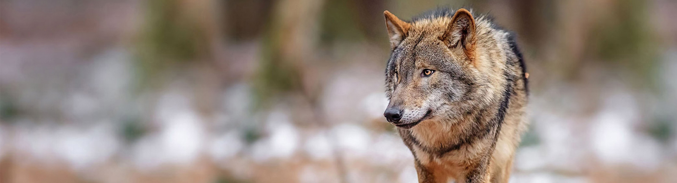 Wolfsabwehr